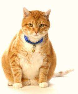 cat food for diabetic cats